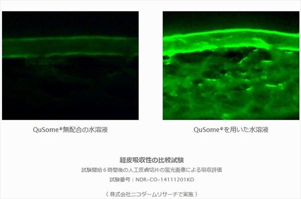 ビーグレン:試験開始6時間後の人工皮膚切片の蛍光画像による吸収評価