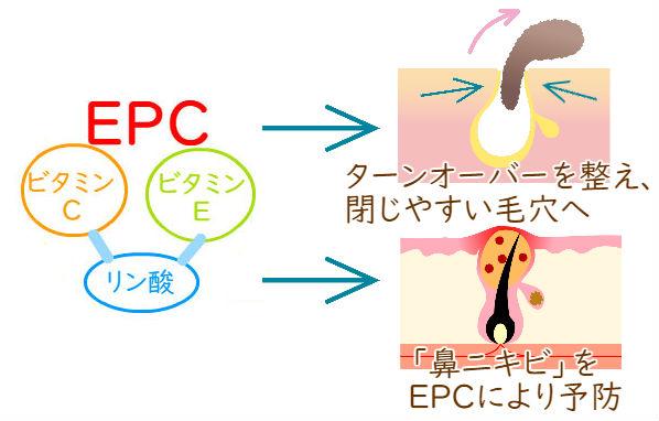 EPCが炎症を抑える